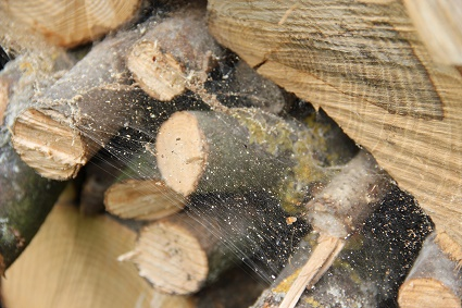 picture of firewood